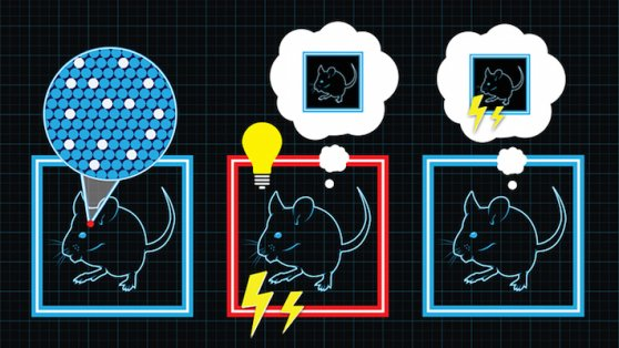 mouse inception image by Evan Wondolowski